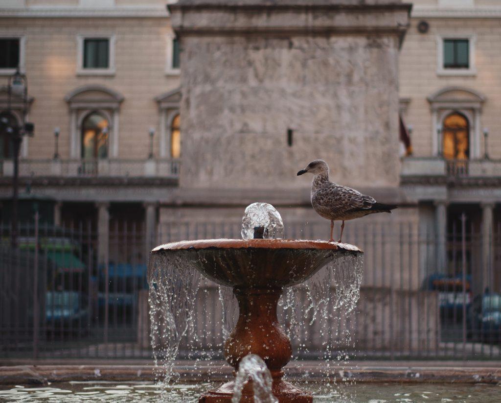 Meeuw in Rome